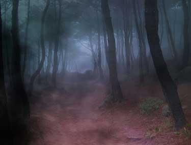 Los bosques de Vidángoz, lugar propicio para llegar hasta la muga sin ser descubiertos.