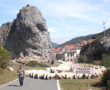 Rebaño de ovejas en Vidángoz (Arguedas)